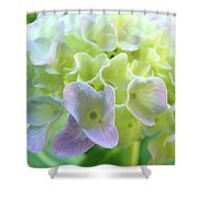 Fine Art Prints Hydrangeas Floral Nature Garden Baslee Troutman Shower Curtain
