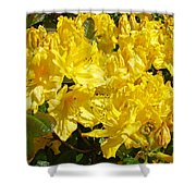 Fine Art Prints Yellow Rhodies Floral Garden Baslee Troutman Shower Curtain