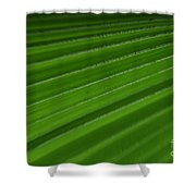 Fine Art- Tulip Shower Curtain