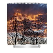Fine Lines 2 Shower Curtain