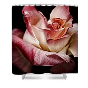 Fire And Ice Rose 2 Shower Curtain