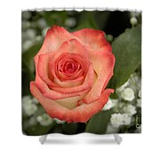 Fire And Ice Rose Shower Curtain