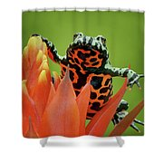 Fire-bellied Toad Shower Curtain