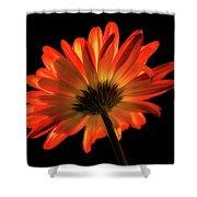 Fire Flower Shower Curtain by Mary Jo Allen