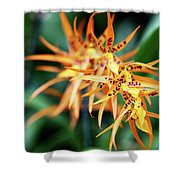 Fire Orchid Shower Curtain