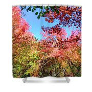 Fire Top Trees Shower Curtain