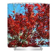 Fire Tree I Shower Curtain
