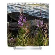 Fire Weed Looking At Lake Superior Shower Curtain