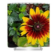 Firecracker Sunflower Shower Curtain