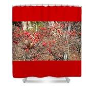 Firethorn Bushes Shower Curtain