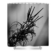 Fireweed Bw Shower Curtain