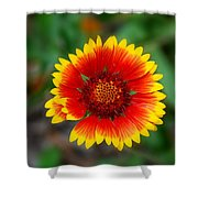 Firewheel Shower Curtain