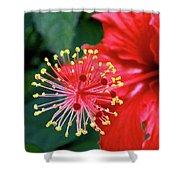 Fireworks - Hibiscus Shower Curtain
