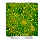 Fireworks Of Dill Flowers Shower Curtain
