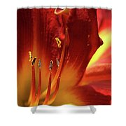 Firey Lily Shower Curtain