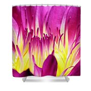 Firey Magenta Shower Curtain