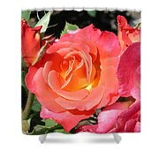 Firey Passion Rose Shower Curtain