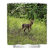 First Baby Fawn Of The Year Shower Curtain