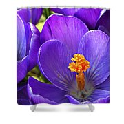First Crocus Shower Curtain
