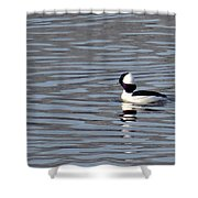 First Day Of Spring Bufflehead2 Shower Curtain