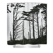 First Line Trees Along The Pacific Ocean Shower Curtain