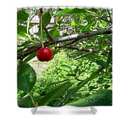 First Of The Season Shower Curtain by Deleas Kilgore