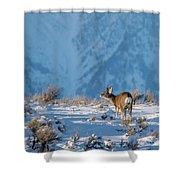 First Rut Mule Deer Buck Shower Curtain