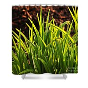 First Signs Of Life Shower Curtain