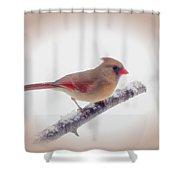 First Snow - Female Cardinal Bird With Vignette Shower Curtain