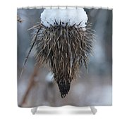 First Snow On The Thistle Shower Curtain