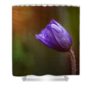 First Spring Flower Rays Shower Curtain by Mary Jo Allen