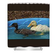 First Swimming Lesson Shower Curtain