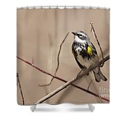 First Warbler Back Yellow Rumped Warbler Shower Curtain