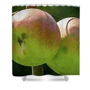 First Year Of Apples 0922pa Shower Curtain