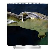 Fish 36 Shower Curtain