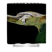Fish 37 Shower Curtain