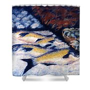 Fish And Shellfish Shower Curtain