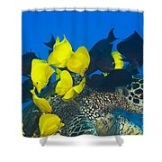 Fish Cleaning Turtle Shower Curtain by Dave Fleetham - Printscapes