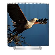 Fish Eagle Taking Flight Shower Curtain