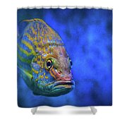Fish Frown Story Shower Curtain