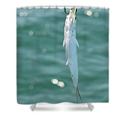 Fish Got Hooked Shower Curtain