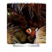 Fish In Sea Anemones Aquarium Shower Curtain