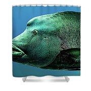 Fish Lips Shower Curtain
