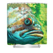 Fish Looking At You Shower Curtain
