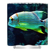 Fish No.3 Shower Curtain