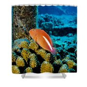 Fish On Coral Shower Curtain