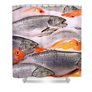 Fish On Ice Shower Curtain