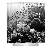 Fish School Rainbow Shower Curtain by Perla Copernik