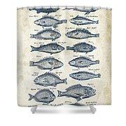 Fish Species Historiae Naturalis 08 - 1657 - 14 Shower Curtain