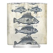 Fish Species Historiae Naturalis 08 - 1657 - 16 Shower Curtain